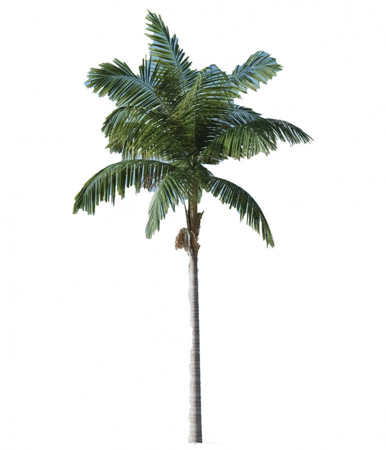 Palm trees, tropical plants, are found in several of these vacation spots.