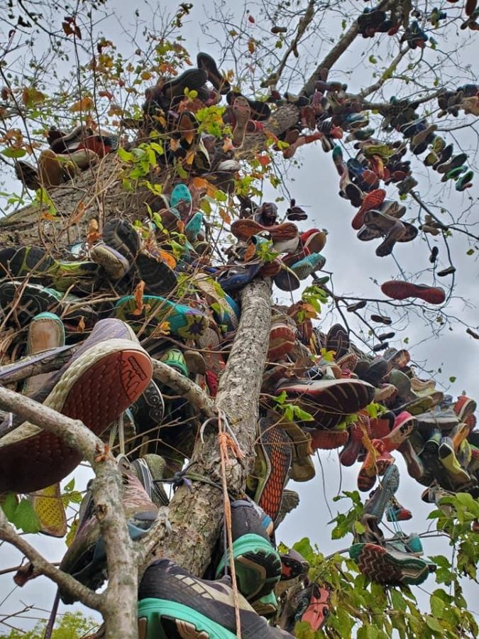 At the infamous LaVern Gibson cross country course hundreds of pairs of seniors' shoes hang.