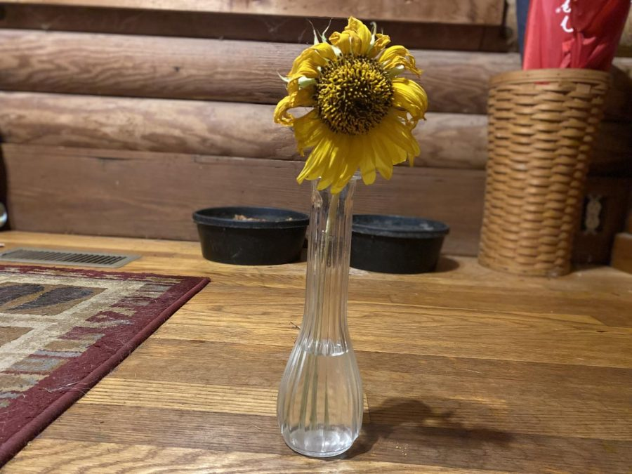 A flower wilts in a vase